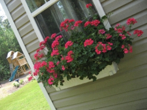 window boxes in summer