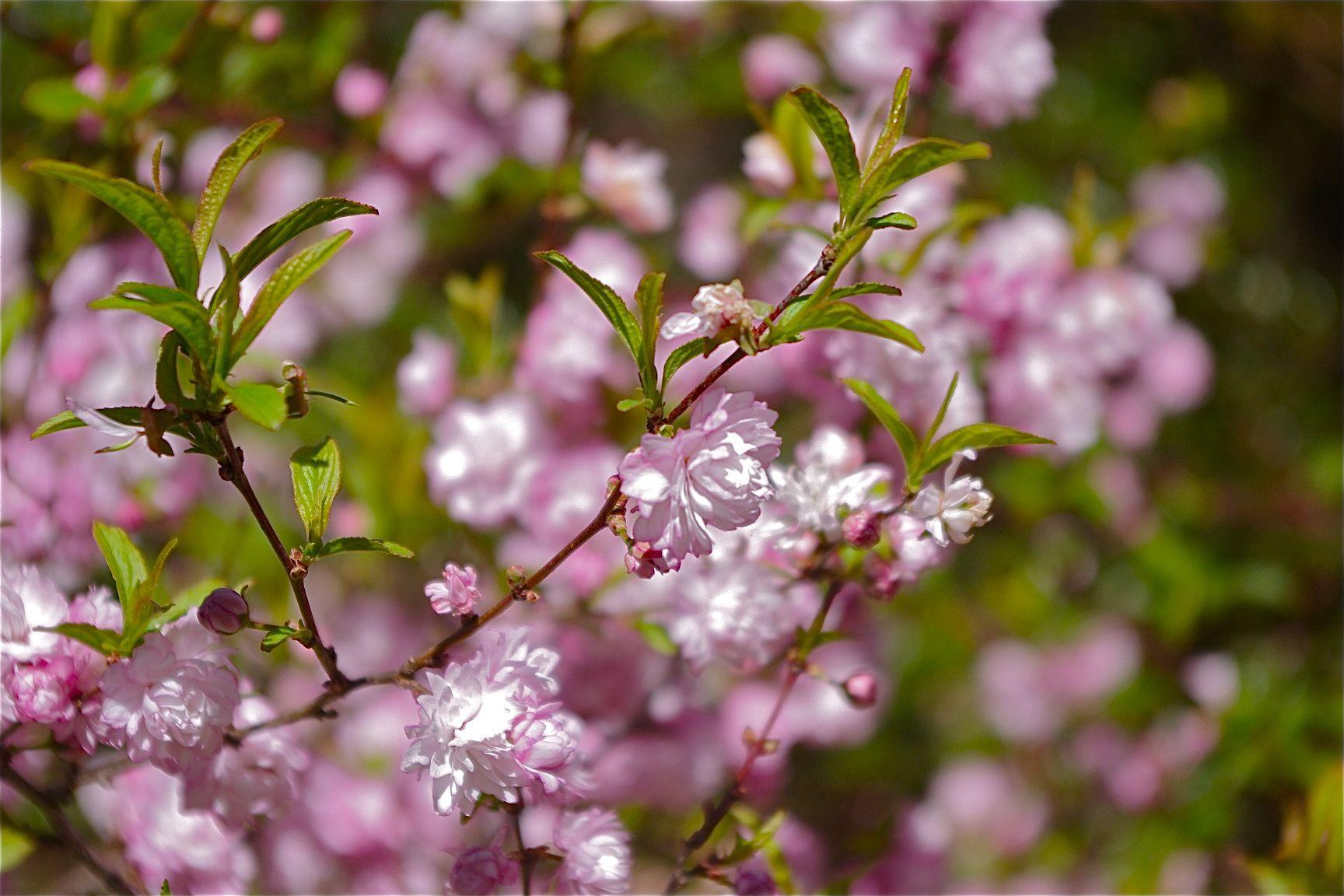 A closer look at spring